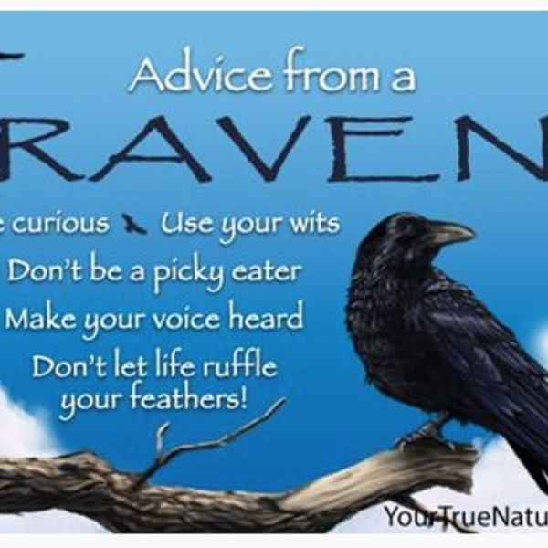 -ADVICE FROM A RAVEN MAGNET