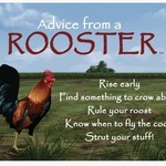 -ADVICE FROM A ROOSTER MAGNET