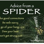 -ADVICE FROM A SPIDER MAGNET