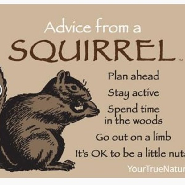 -ADVICE FROM A SQUIRREL MAGNET
