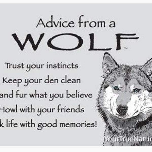 -ADVICE FROM A WOLF MAGNET