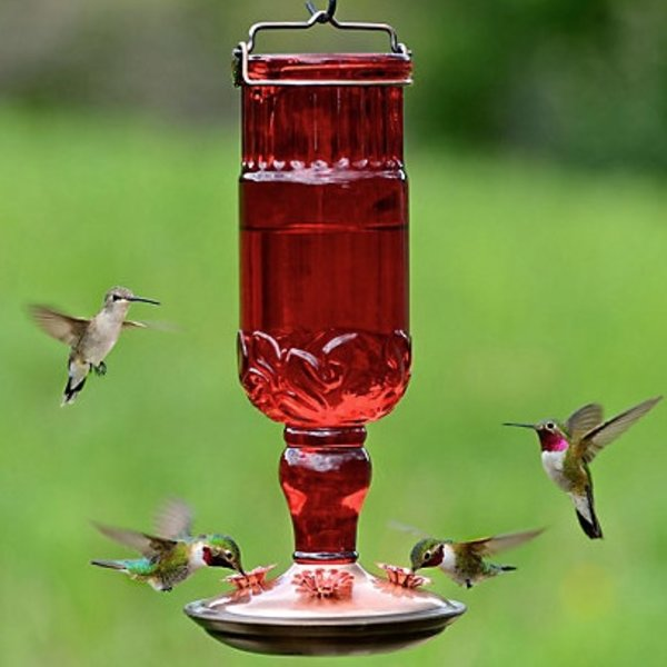 - PERKY PET RED ANTIQUE GLASS HUMMINGBIRD FEEDER