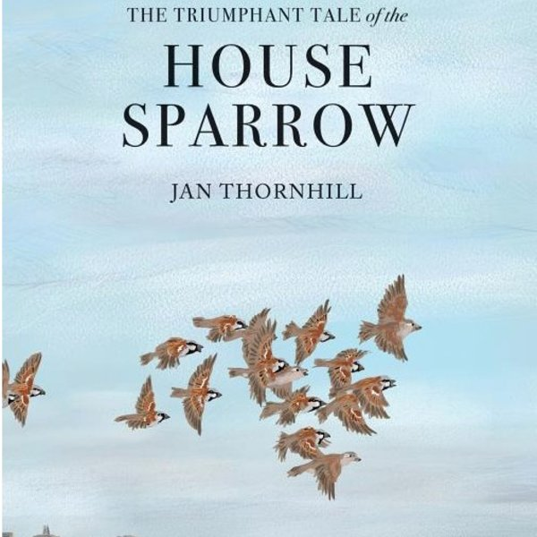 - THE TRIUMPHANT TALE OF THE HOUSE SPARROW
