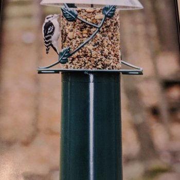 - BIRDS CHOICE POLE MOUNTED SEED CYLINDER FEEDER W/SQUIRREL BAFFLE