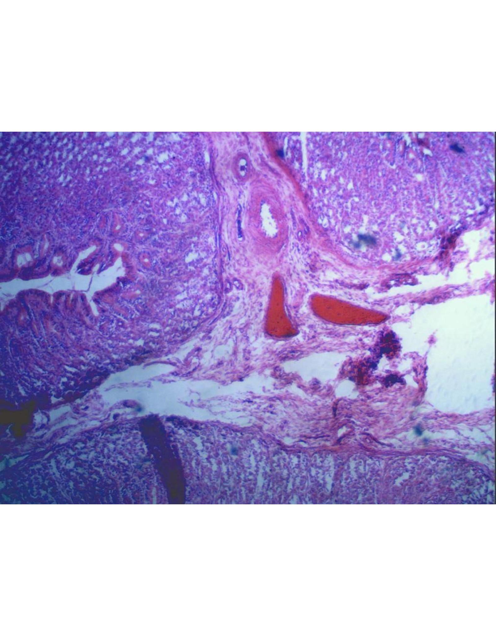 Celestron Celestron  5MP Digital Microscope Imager
