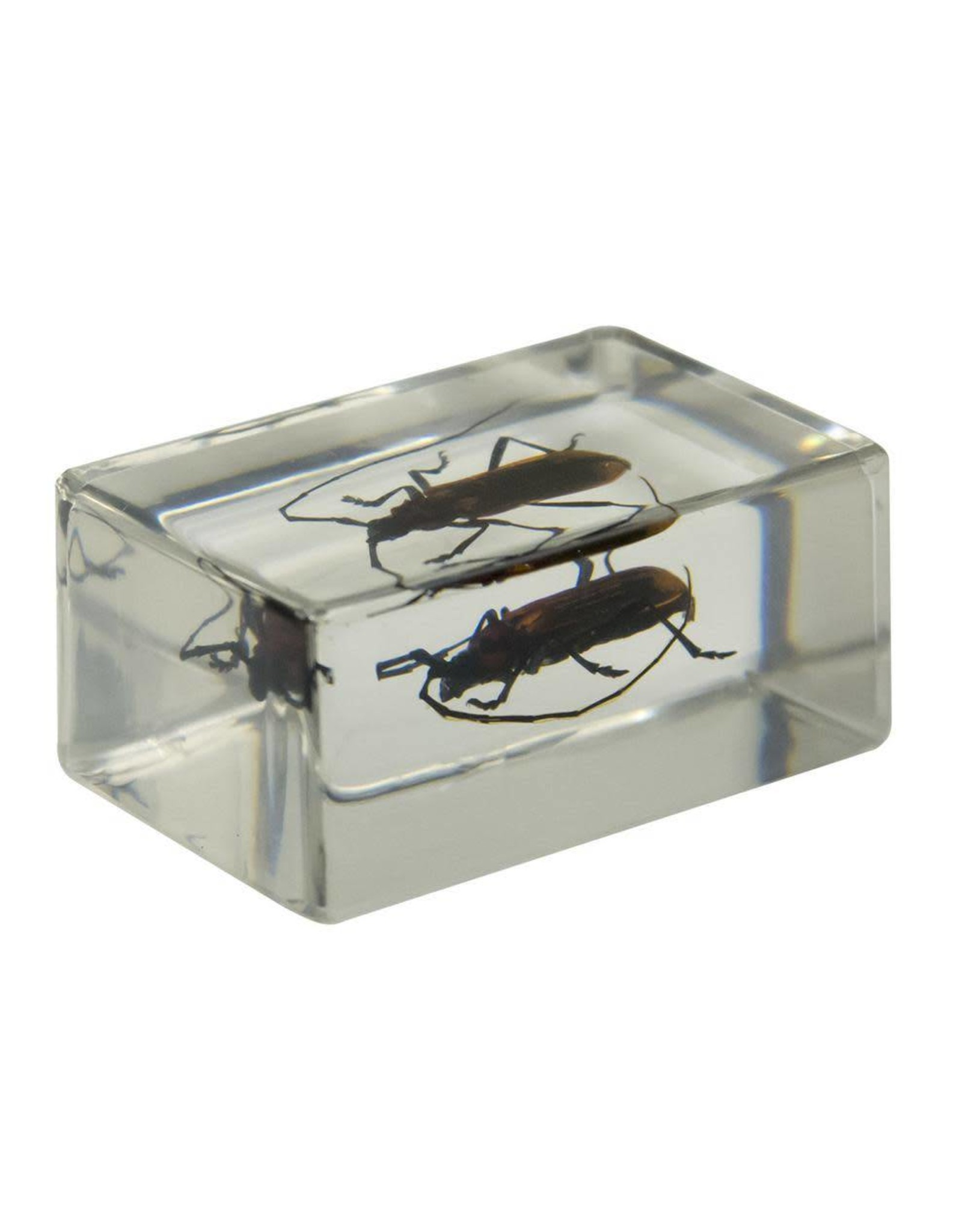 Celestron Celestron 3D Bug Specimen Kit #1(Limited Quantities)