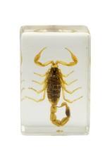Celestron Celestron 3D Bug Specimen Kit #1