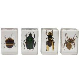 Celestron Celestron 3D Bug Specimen Kit #2