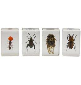 Celestron Celestron 3D Bug Specimen Kit #3 (Limited Quantities)