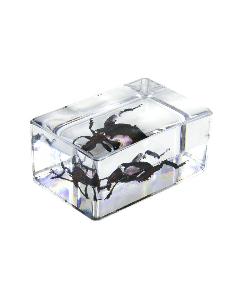 Celestron Celestron 3D Bug Specimen Kit #5