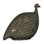 Black Speckled White French Guinea Hen