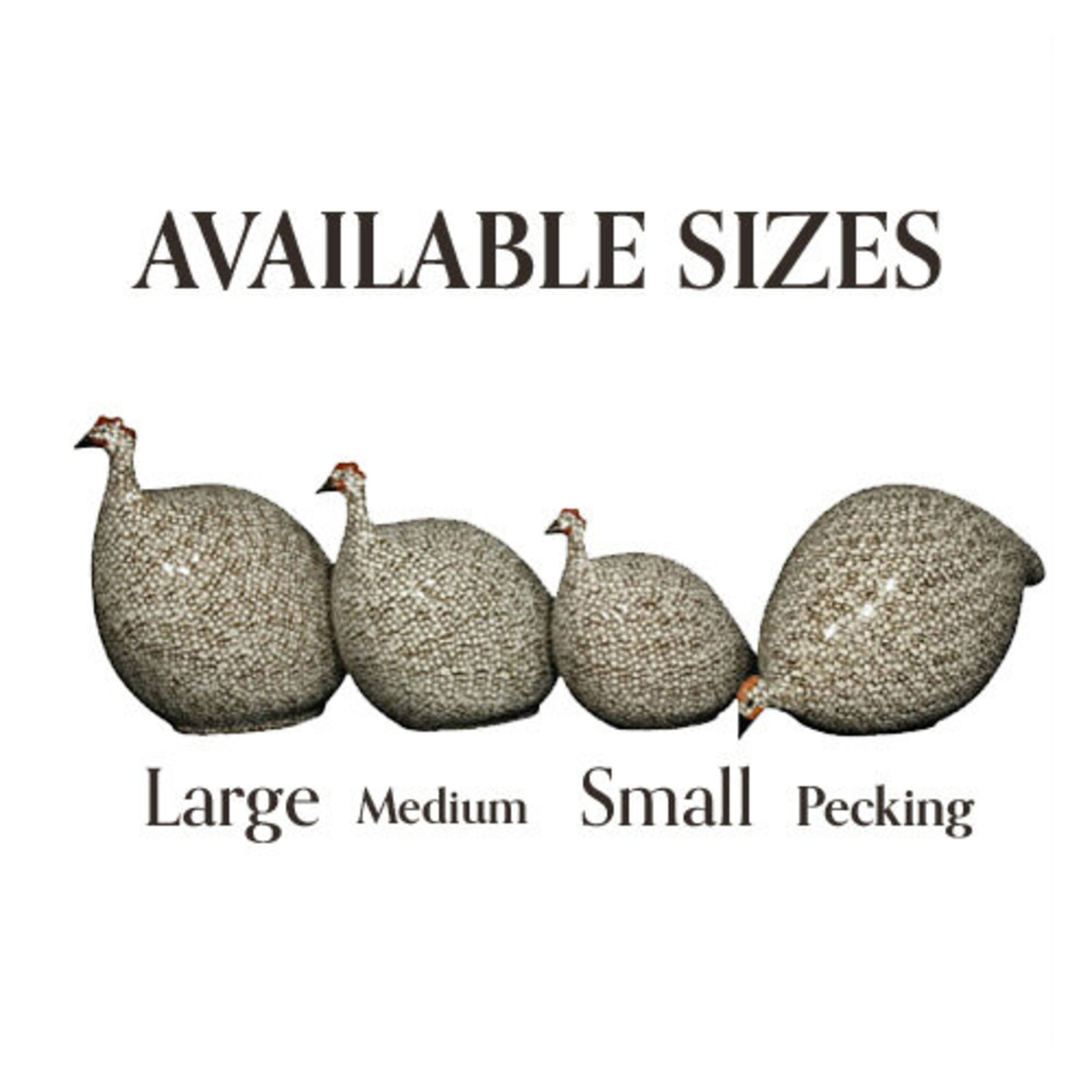 Red Speckled White French Guinea Hen
