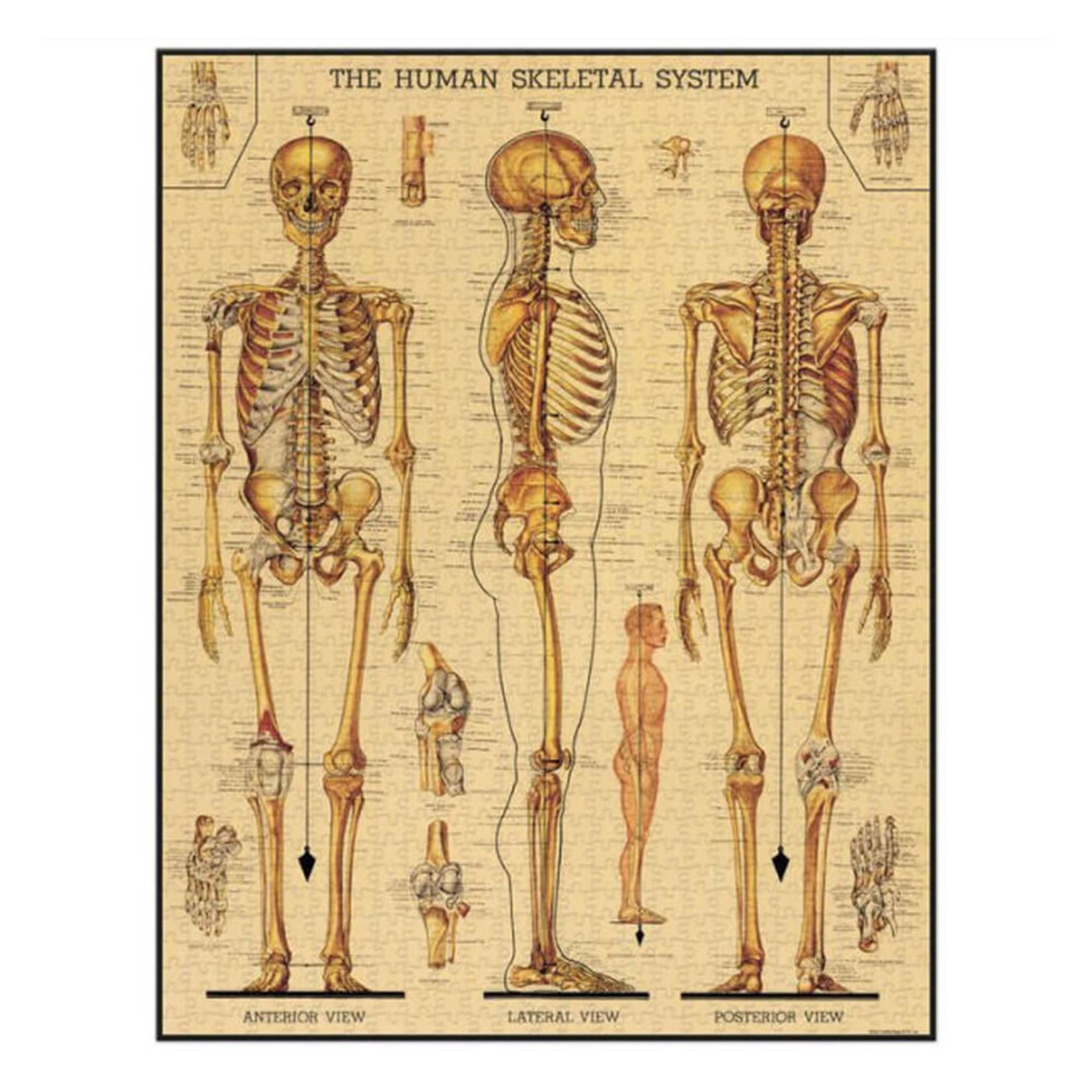 Cavallini & Co. 1000 Pc. Puzzle — Skeletal System