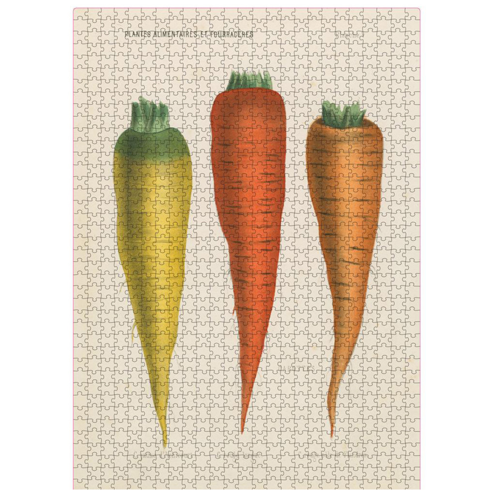 John Derian Puzzle — Three Carrots
