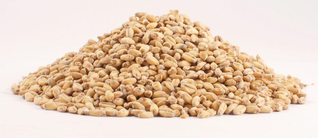 Grain Weyermann Pale Wheat 1 Lb