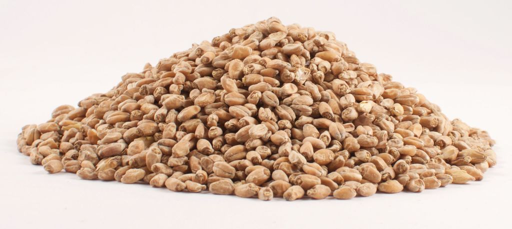 Grain Briess Red Wheat Malt 1 Lb