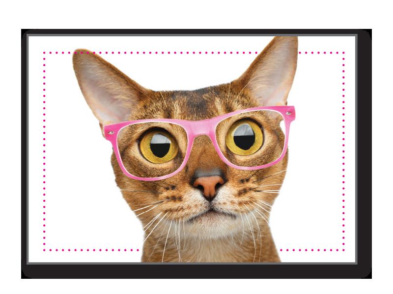 BIRTHDAY CAT - MEOWVELOUS