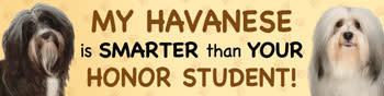 Mag Bumper Sticker - Havanese /Honor Student