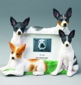 Frame-Rat Terrier