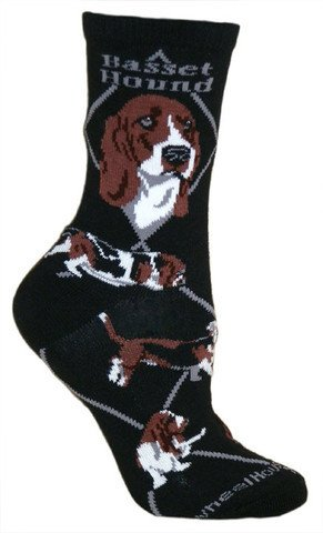 Basset on Black Socks