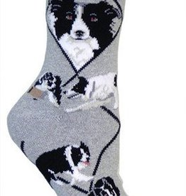 Border Collie - Gray Socks