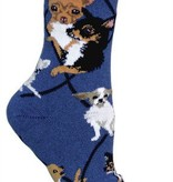 Chihuahua on Blue Socks