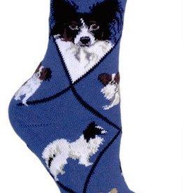 Papillon on Blue Socks