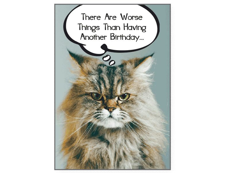 Cat Card A lot worse things