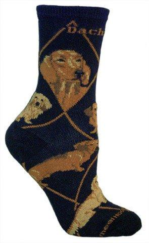 Dachshunds on black sock