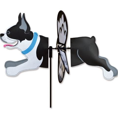 Petite Spinner-Boston Terrier