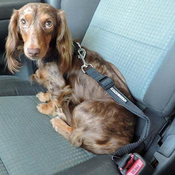 Doggie Design Seat Belt Strap