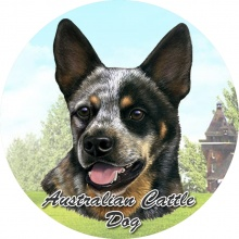 Absorbent Car Coaster - Australian Cattle Dog