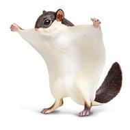 Safari Safari Flying Squirrel