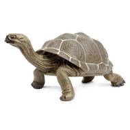 Safari Safari Tortoise