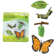 Safari Safari Life Cycle of a Monarch Butterfly