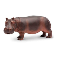 Safari Safari Hippopotamus
