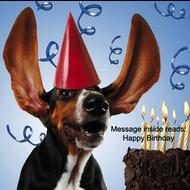 Happy Birthday - Birthday Cake Dog Card
