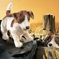 Folkmanis Folkmanis Jack Russell Terrier Puppet