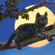 Folkmanis Folkmanis Black Cat Puppet