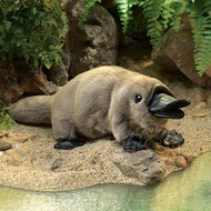 Folkmanis Folkmanis Baby Platypus Puppet