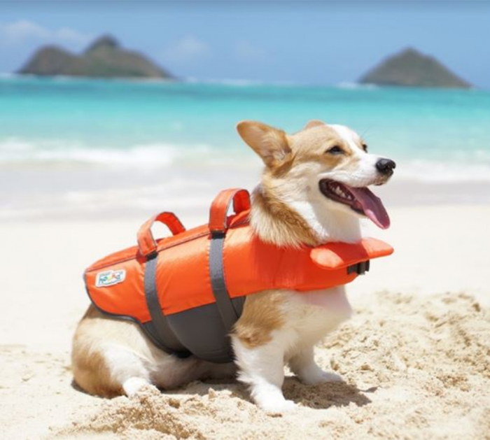 OUTWARD HOUND Granny Splash Life Jackets for Dogs