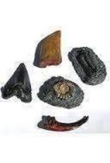 Fossil Replicas