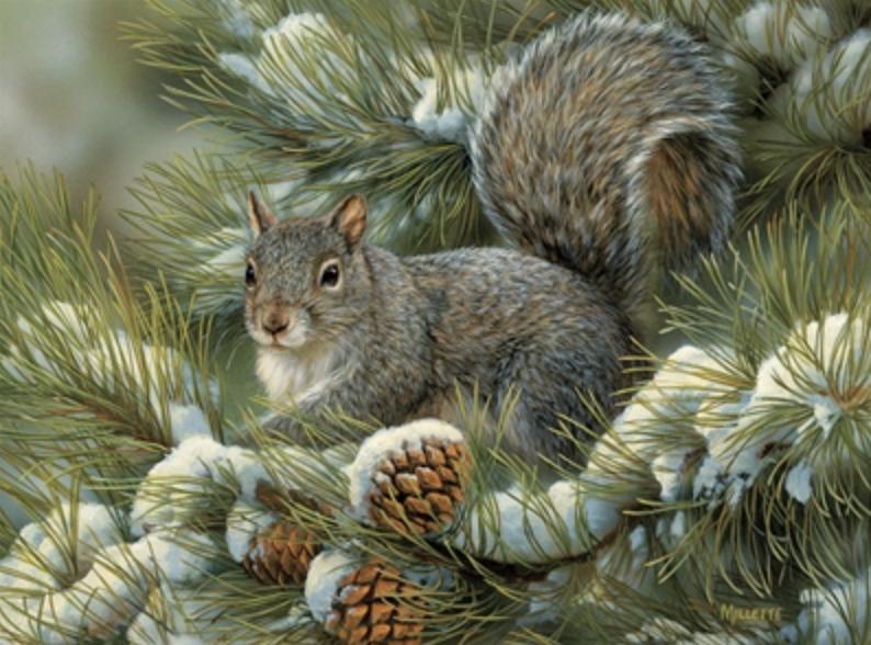 Cobble Hill Gray Squirrel