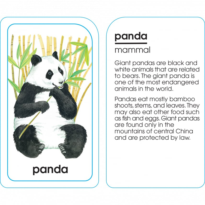 School Zone Publishing Company Animals of All Kinds Flash Cards