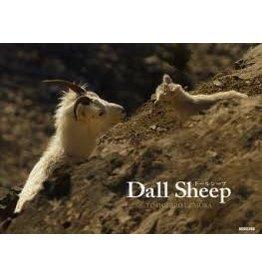 Dall Sheep - Tomohiro Uemura