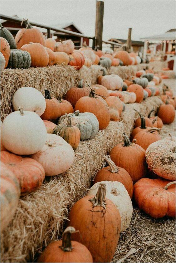 5 façons d'accueillir l'automne