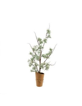 Indaba Holiday Olive Tree