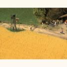 Busch 1204 Wheat Field, HO Scale