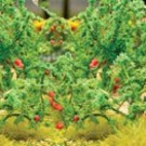 "JTT 95526 Tomato Plants, O Scale, 1.5"" tall"