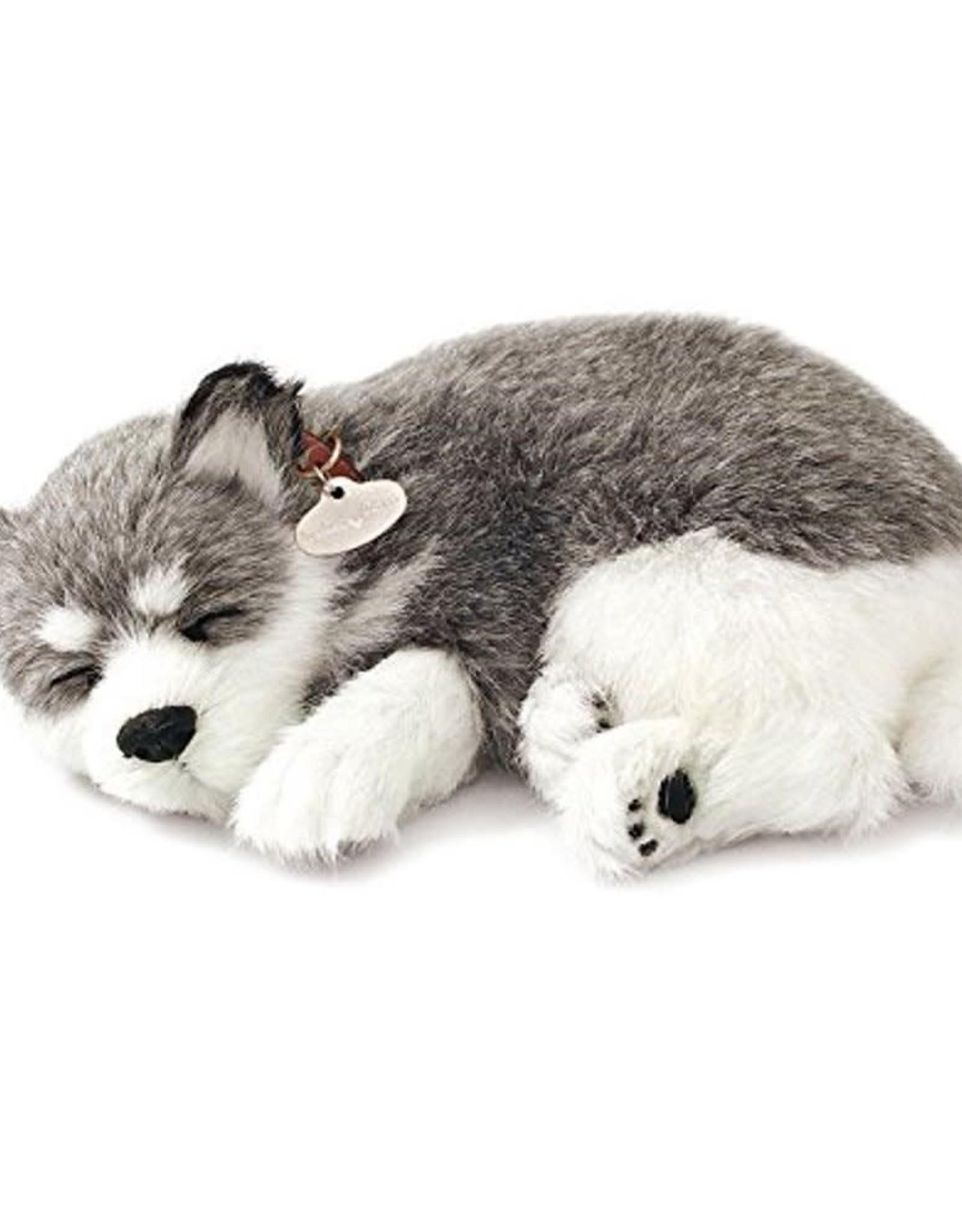 Perfect Petzzz Alaskan Husky